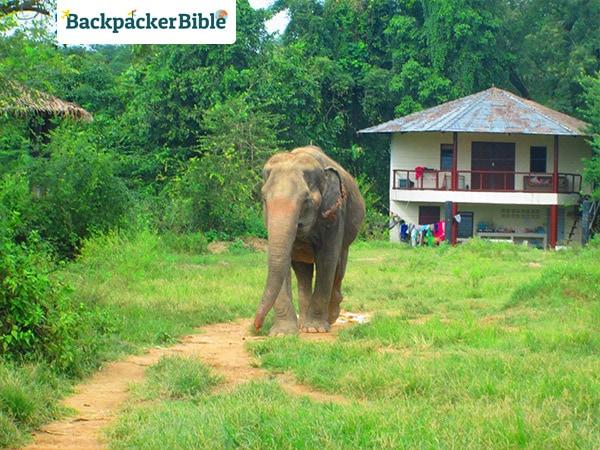 elephantroaming