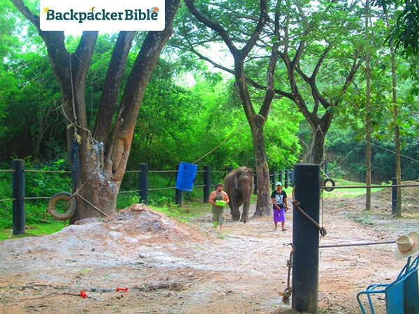 elephantwalk2