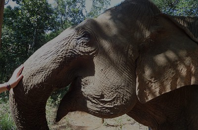 Responsible Elephant Encounters in Mondulkiri