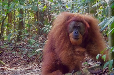 Why Sumatra should be your next responsible travel destination
