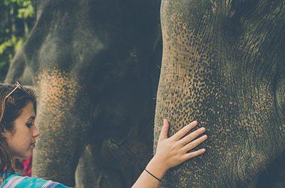 Bourjour & Patara Elephant Farm