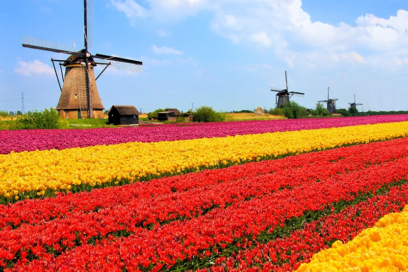 Backpackers Netherlands Guide