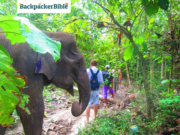 elephantwalk5