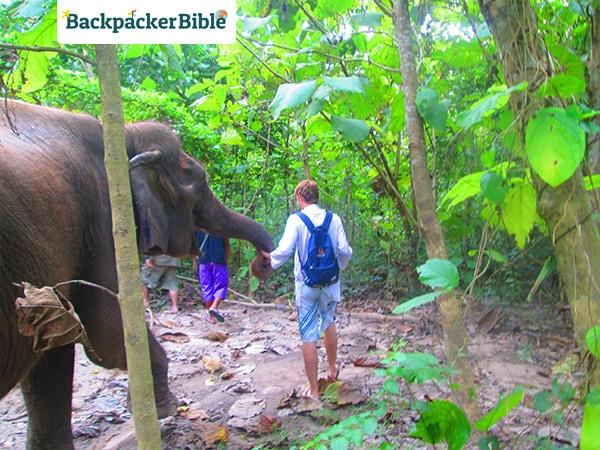 elephantwalk6