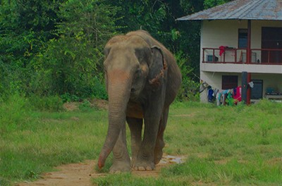 Responsible Alternatives to Elephant Rides
