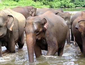 Choosing the right elephant sanctuary