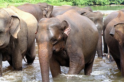 Choosing the right elephant sanctuary to visit