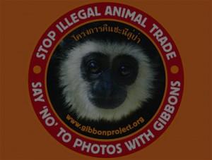 Gibbon Feat Image