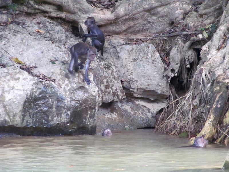 MonkeySwimmingHole1