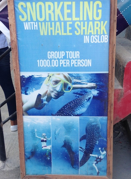 whale shark tourism Oslob