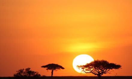 Travelling to Tanzania? 5 Reasons to Book Local