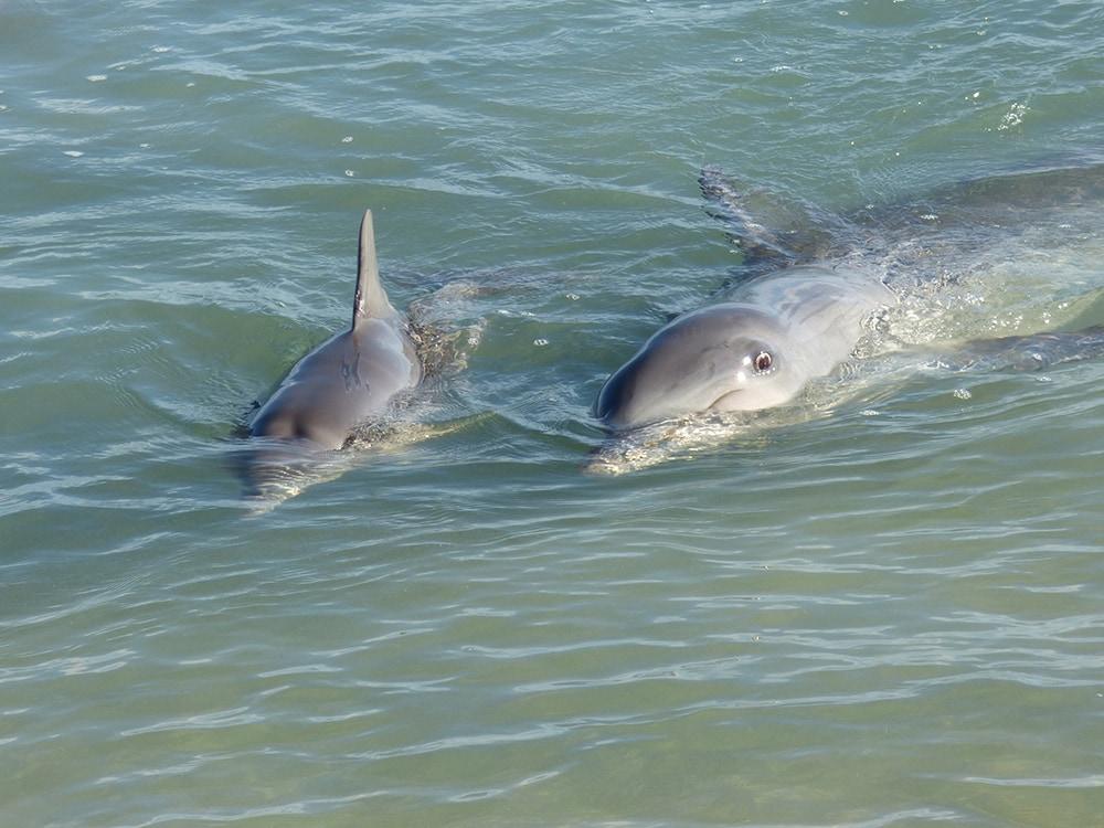 Monkey Mia Baby Dolphin