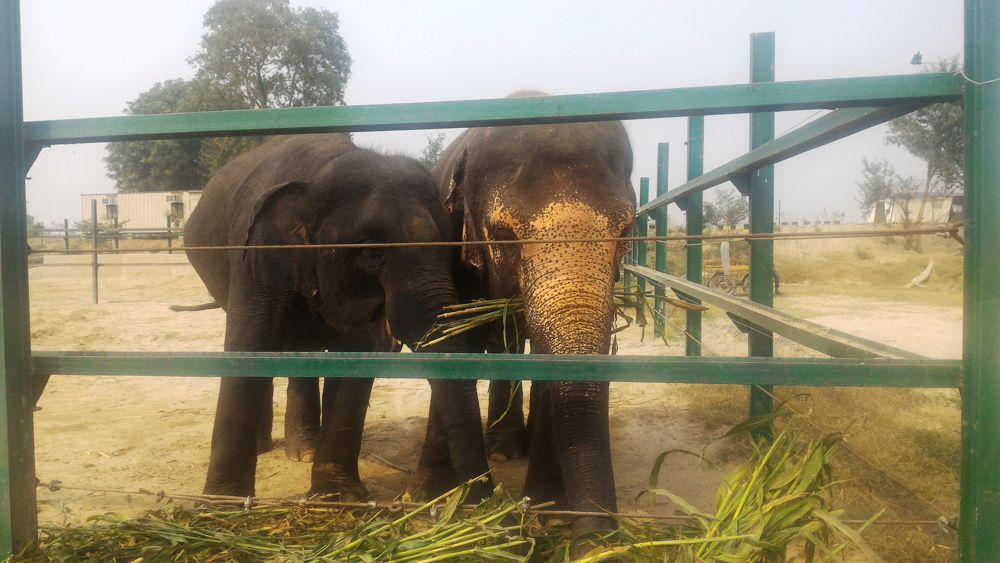 Elephant Conservation Agra