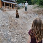 Meet & greet with bears in the Balkan
