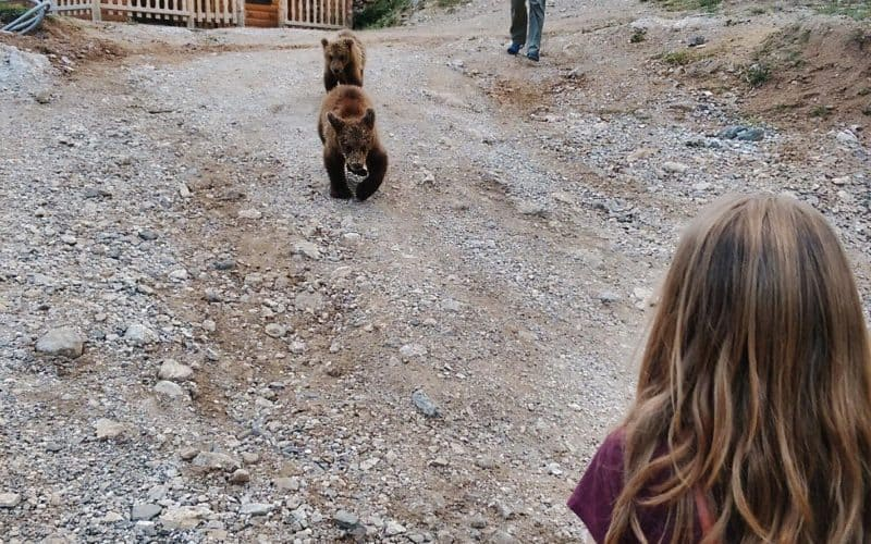 Meet & greet with bears in the Balkan